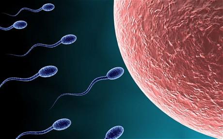 sperms Tips Vitamin Kesuburan Untuk Lelaki